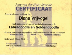 certificaat doodle